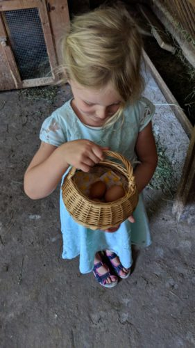 Thomasegghof Eier sammeln