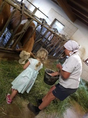 Kühe füttern Thomasegghof