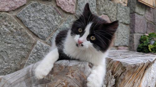 Katze Thomasegghof
