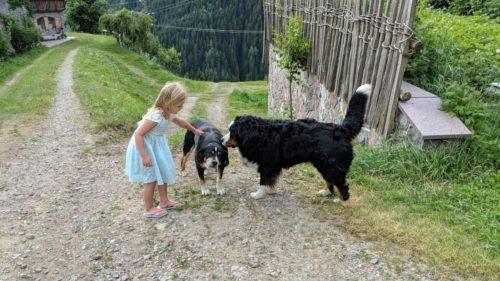 Hofhunde Thomasegghof